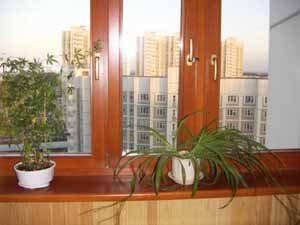 Что ни говорите, но деревянные окна в квартире, в доме за городом смотрятся значительно лучше пластиковых, вот только повысить бы их надёжность, да и не помешает, чтобы цена была поменьше