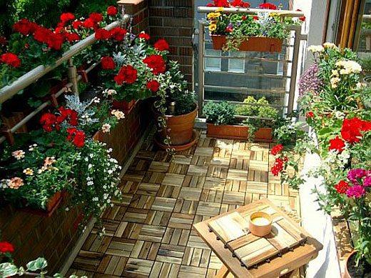 цветы комнатные на лоджии