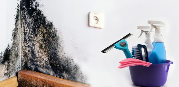 качество воздуха в помещении борьба с плесенью
