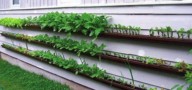 огород на балконе видео