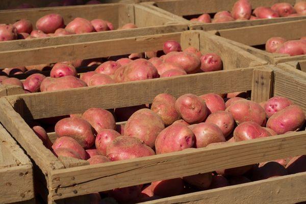 При закладке овощей в подвал больше подойдут самые обычные деревянные ящики