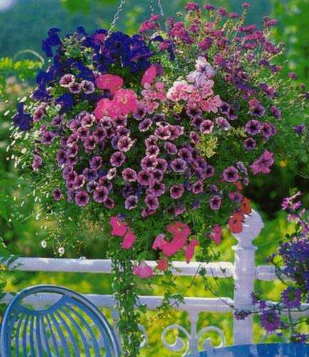 Цветы для балконов – яркие и сочные оттенки ампельных растений