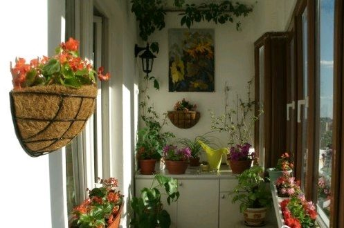 Красивый дизайн: маленький балкон, озелененный по всем правилам