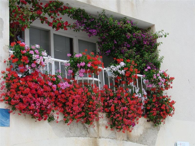 Восхитительная композиция для открытого балкона: цветы, их аромат – это сказка, в которую можете окунуться и вы