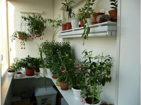 как сделать зимний сад на лоджии