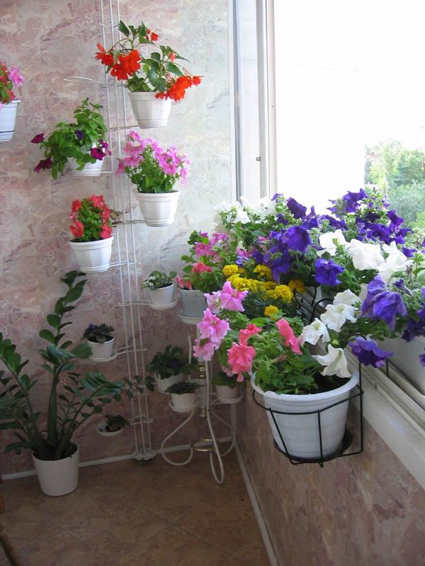 Как оформить цветочную оранжерею на балконе фотогалереи..