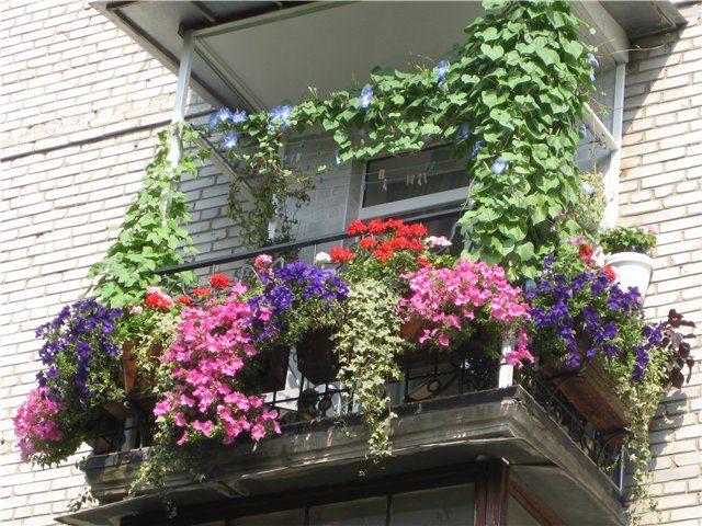 Оформление балкона креативные идеи