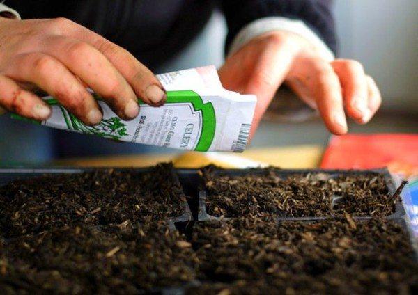 тапы выращивания огурцов на лоджиях, балконах, верандах</h2 srcset=