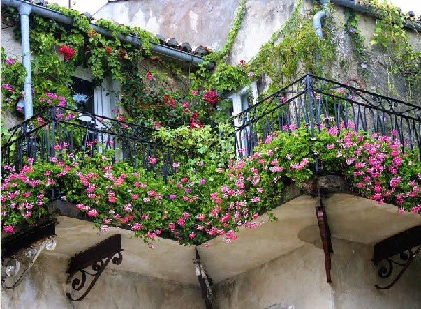 Балкон в цветах – прекрасный вид и отличное настроение