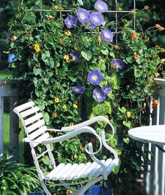 Вьющимся растениям необходимо обеспечить подпорку