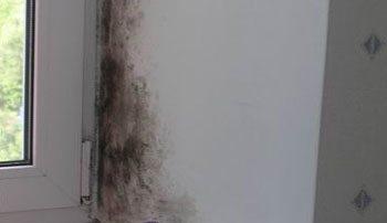 Проблема появления конденсата на окнах может служить причиной возникновения грибков и плесени на стенах, что отрицательно отражается на здоровье