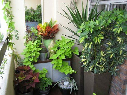 Создать великолепный сад на балконе можно с помощью комнатных цветов