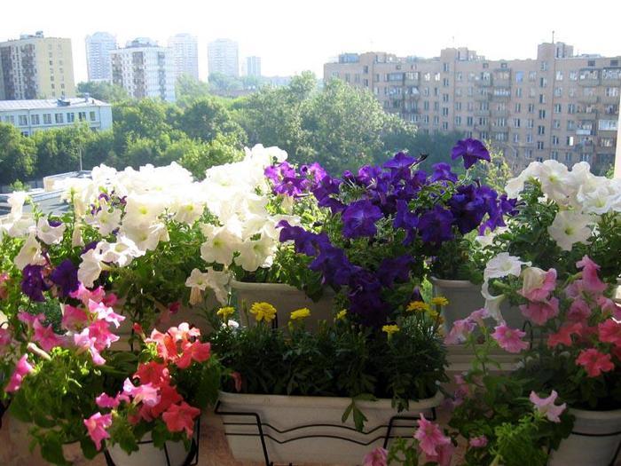 Озеленение балкона – уютная обстановка