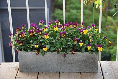 Ящик для цветов балконный, где произрастает один вид растений