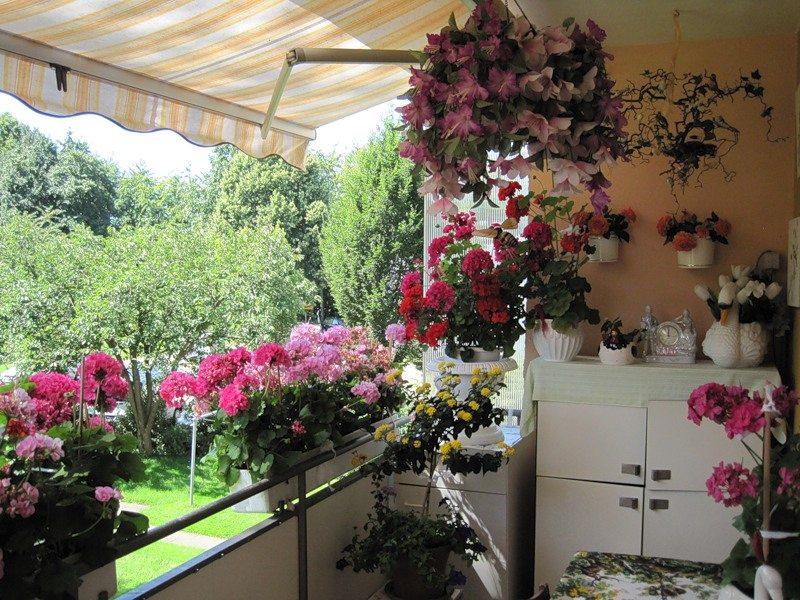 Настоящий цветущий сад на балконе